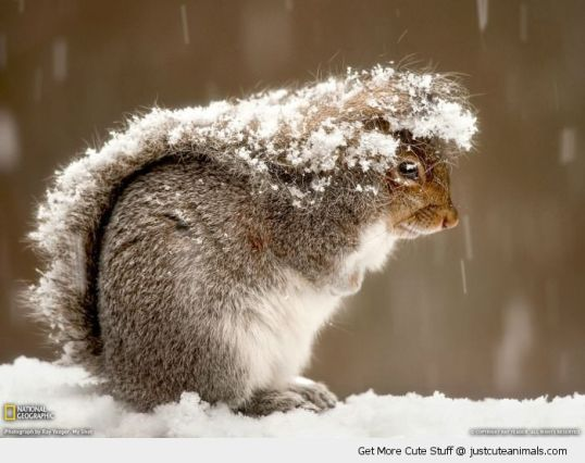 cute-animals-squirrel-tail-head-sheltering-snow-pics