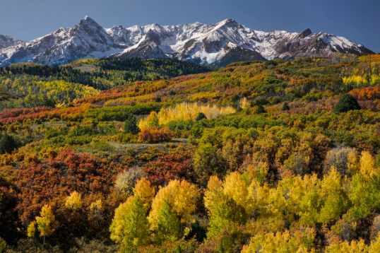 autumn-aspen-trees--populus-tremuloides--and-sneffels-range--mount-sneffels-wilderness--uncompahgre-national-forest--colorado--usa-740527311-59dec05daf5d3a001052fe6c